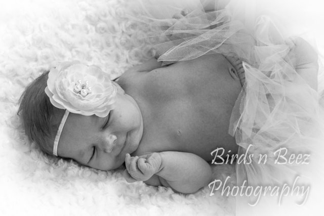 newborn portrait baby black & white